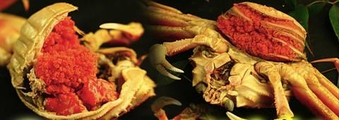 セコガニが激安なので家族でたっぷり美味しく食べよう。